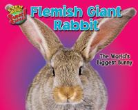Flemish giant rabbit : the world's biggest bunny