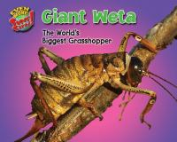 Giant weta : the world's biggest grasshopper