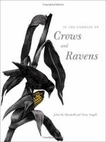 In the Company of Crows and Ravens