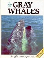 A Pod of Gray Whales