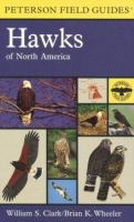 A Field Guide to Hawks, North America