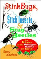 Stinkbugs, Stick Insects, and Stag Beetles