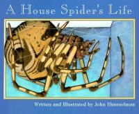 A House Spider's Life