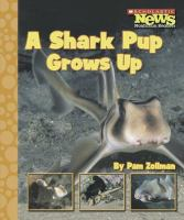 A Shark Pup Grows up