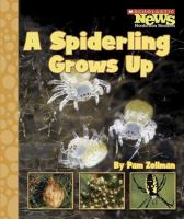 A Spiderling Grows up