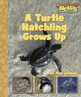 A Turtle Hatchling Grows up