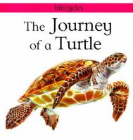 The Journey of A Turtle