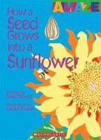 How A Seed Grows Into A Sunflower