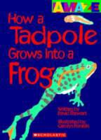 How A Tadpole Grows Into A Frog