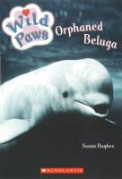 Orphaned Beluga