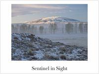 Sentinel in Sight