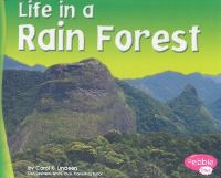 Life in A Rain Forest