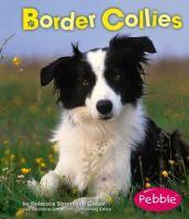 Border Collies