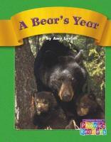 A Bear's Year