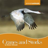 Cranes and Storks