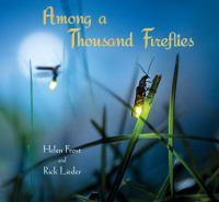 Among A Thousand Fireflies