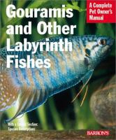 Gouramis and Other Labyrinth Fishes