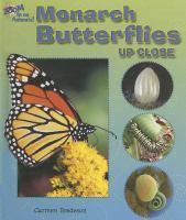 Monarch Butterflies up Close
