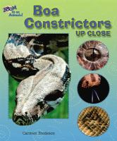 Boa Constrictors up Close