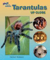 Tarantulas Up Close