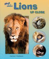 Lions up Close