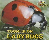 Zoom in on Ladybugs