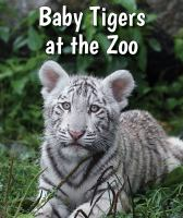 Baby Tigers at the Zoo