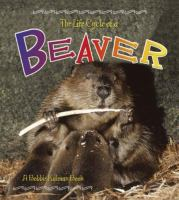 The Life Cycle of A Beaver