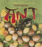 The Life Cycle of An Ant