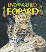 Endangered Leopards