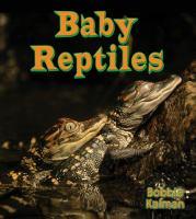 Baby Reptiles