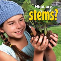 What Are Stems?