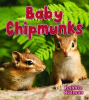 Baby Chipmunks