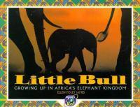 Little Bull
