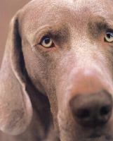 William Wegman Polaroids