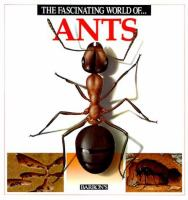 The Fascinating World Of-- Ants
