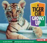 A Tiger Cub Grows up