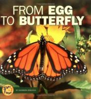 Image: From Egg to Butterfly