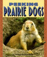 Peeking Prairie Dogs