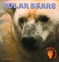 Plar Bears