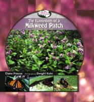 The Ecosystem of A Milkweed Patch