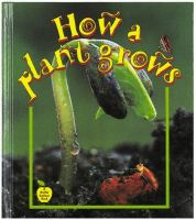 How A Plant Grows