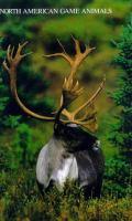 North American Game Animals