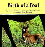 Birth of A Foal