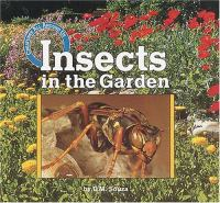 Insects in the Garden