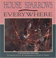 House Sparrows Everywhere