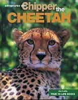 Chipper the Cheetah