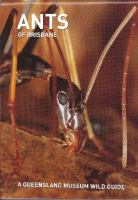 Ants of Brisbane