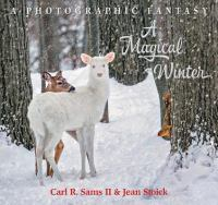A Magical Winter