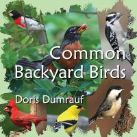 Common Backyard Birds